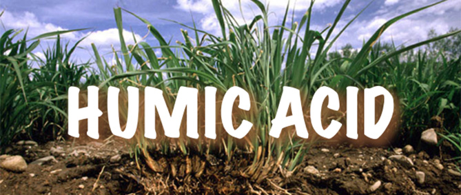 humic-acid-featured